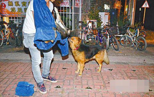 Xúc động chú chó nằm 10 tiếng trông thi thể đồng loại bị xe tông - Ảnh 3