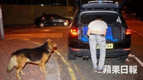 Xúc động chú chó nằm 10 tiếng trông thi thể đồng loại bị xe tông - Ảnh 4