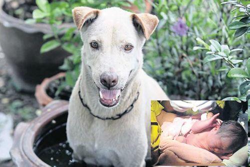 Xúc động chú chó lang thang nỗ lực cứu bé sơ sinh bị bỏ rơi - Ảnh 1