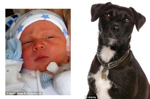 Chó cưng ghen tị cắn chết đứa con 3 tuần tuổi của chủ - Ảnh 1
