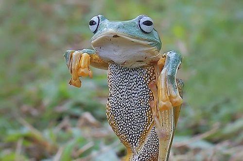 Thích thú với bức ảnh chụp con ếch bay tung cước như võ sư - Ảnh 1