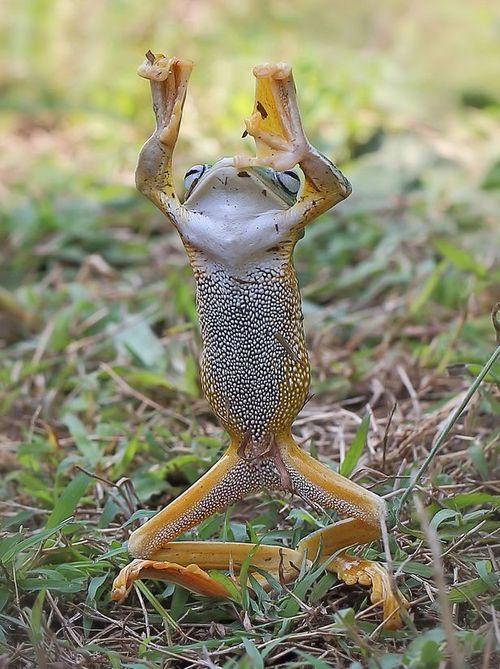 Thích thú với bức ảnh chụp con ếch bay tung cước như võ sư - Ảnh 2