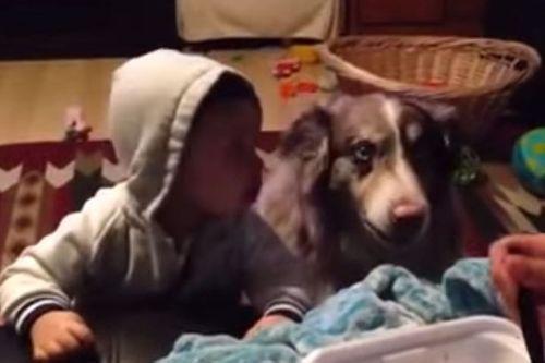 """Clip chú chó tập phát âm từ """"mama"""" cùng em bé cực dễ thương - Ảnh 1"""