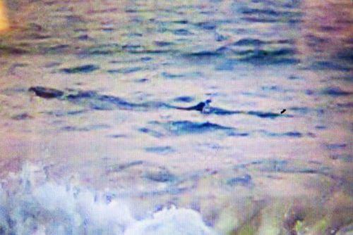 Cá lạ nặng khoảng 1 tấn xuất hiện tại biển Tuy Hòa, cảnh báo nguy hiểm - Ảnh 1