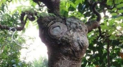 Đỏ mặt vì cây dâu da quá khêu gợi - Ảnh 1