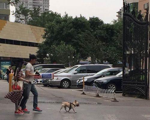 Phạm Băng Băng, Lý Thần tay trong tay dắt thú cưng dạo phố - Ảnh 2