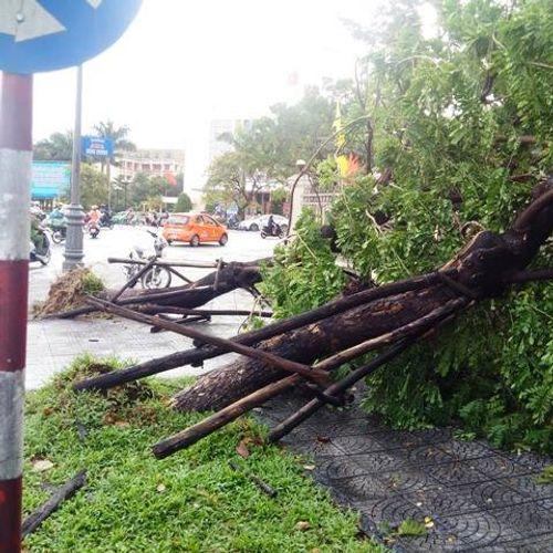Cảnh tượng tan hoang sau khi bão số 4 đi vào đất liền - Ảnh 6