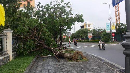 Cảnh tượng tan hoang sau khi bão số 4 đi vào đất liền - Ảnh 3