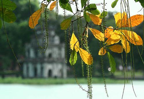Dự báo thời tiết ngày mai 15/11: Bắc Bộ nắng, Trung Bộ mưa dông - Ảnh 1