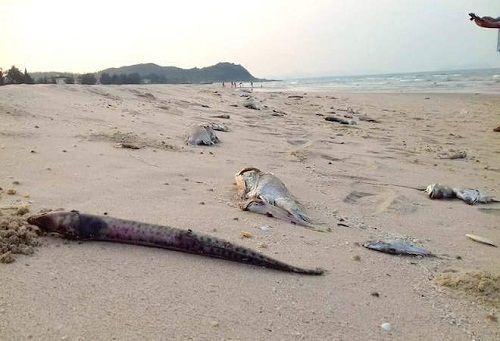Cá chết hàng loạt: Lập hội đồng chuyên gia quốc gia tìm nguyên nhân - Ảnh 1