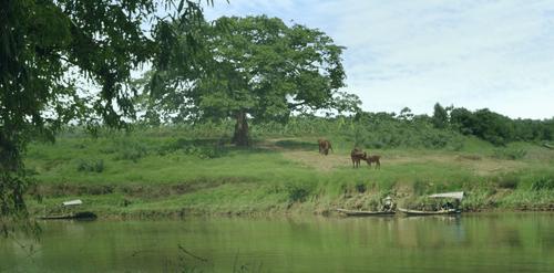 Cuộc đời của Yến: Điểm sáng tiếp theo của phim Việt? - Ảnh 2