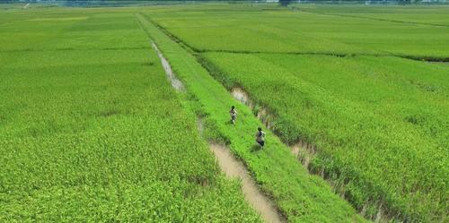 Cuộc đời của Yến: Điểm sáng tiếp theo của phim Việt? - Ảnh 1