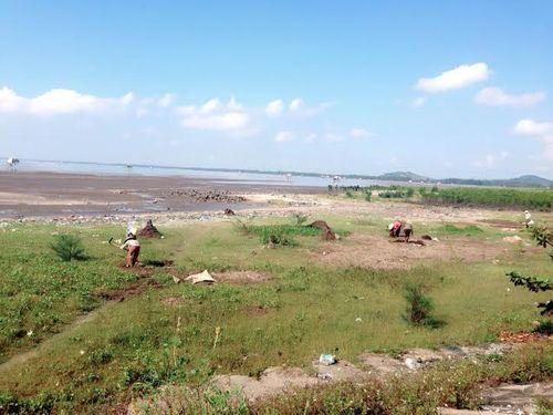 Nghệ An: Dân đổ xô đi đào cây thuốc hương phụ bán cho Trung Quốc  - Ảnh 4