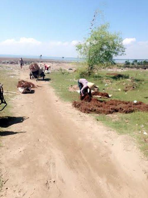 Nghệ An: Dân đổ xô đi đào cây thuốc hương phụ bán cho Trung Quốc  - Ảnh 3