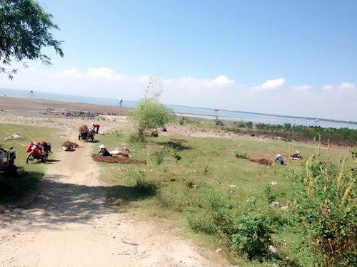 Nghệ An: Dân đổ xô đi đào cây thuốc hương phụ bán cho Trung Quốc  - Ảnh 1