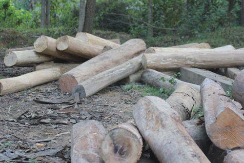 Vận chuyển gỗ trái phép trên đường mòn Hồ Chí Minh - Ảnh 1