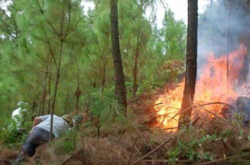 Nghệ An: Lửa bùng phát thiêu rụi 5ha rừng thông  - Ảnh 2