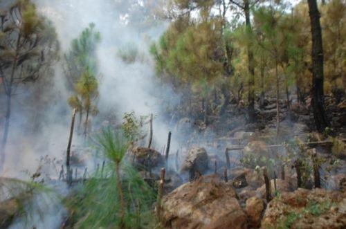 Nghệ An: Lửa bùng phát thiêu rụi 5ha rừng thông  - Ảnh 1