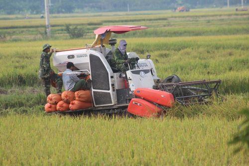 Muốn gặt lúa phải đóng 2 triệu đồng cho xã - Ảnh 1