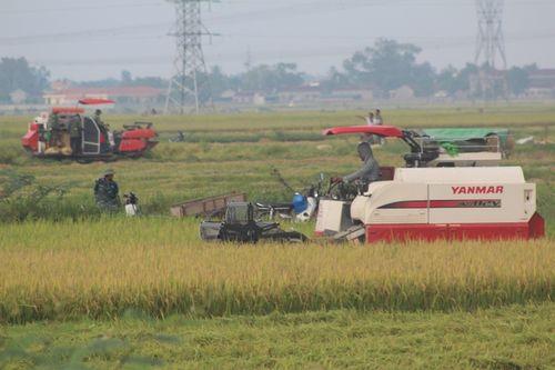 Muốn gặt lúa phải đóng 2 triệu đồng cho xã - Ảnh 2