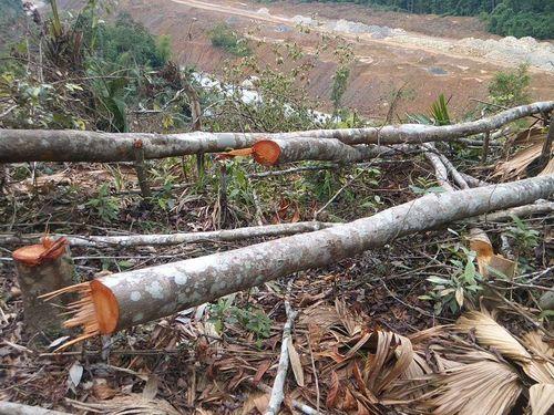 Khởi tố đối tượng phá rừng tại Vũ Quang  - Ảnh 1