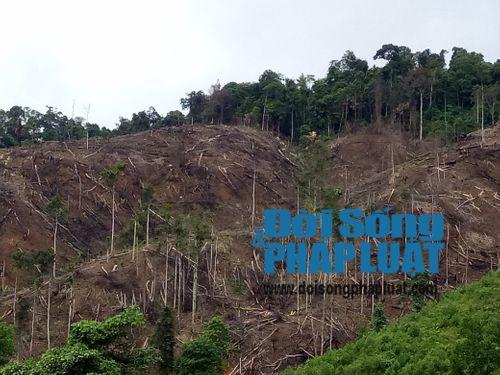Rừng phòng hộ bị phá tan hoang: Kiểm lâm Hà Tĩnh lên tiếng - Ảnh 1