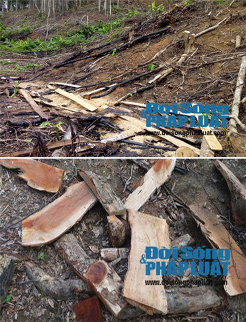 Rừng phòng hộ bị phá tan hoang, Ban quản lý ở gần không biết - Ảnh 2