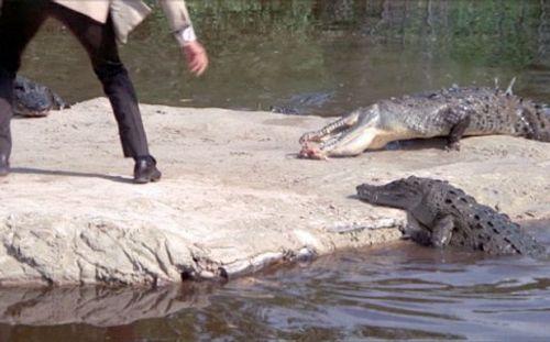 Indonesia dùng cá sấu để canh giữ tù nhân như phim James Bond - Ảnh 2