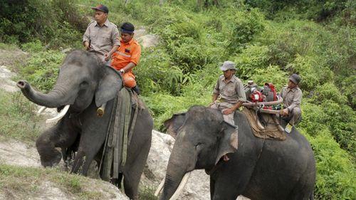"""Indonesia huấn luyện voi thành """"lính cứu hỏa"""" - Ảnh 1"""