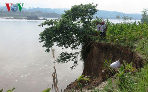 """Sạt lở nghiêm trọng bờ sông Hồng ở Yên Bái """"nuốt"""" hàng nghìn mét đất - Ảnh 3"""