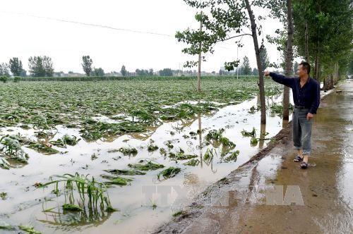 Hơn 120 người chết và mất tích do bão ở Trung Quốc - Ảnh 3