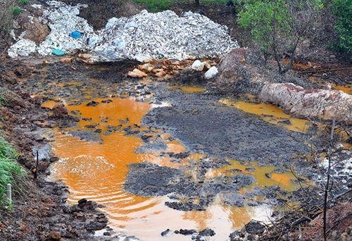 Vật nuôi, cây trồng chết ồ ạt bên bãi rác nghi đổ hóa chất - Ảnh 2