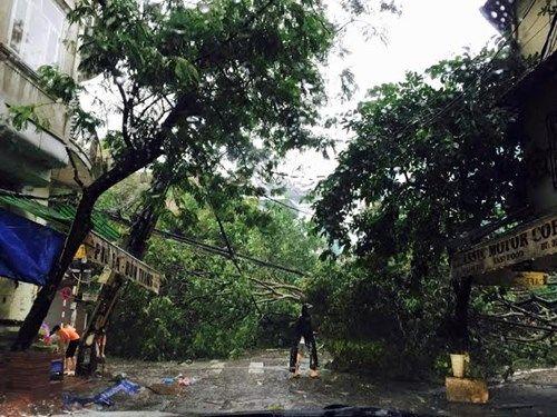 Mưa to, gió giật mạnh khiến cây đổ ngổn ngang tại Hà Nội - Ảnh 7