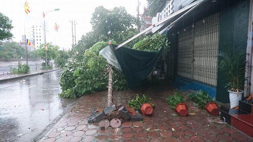 Mưa to, gió giật mạnh khiến cây đổ ngổn ngang tại Hà Nội - Ảnh 3