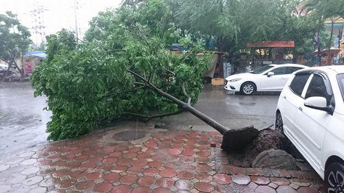 Mưa to, gió giật mạnh khiến cây đổ ngổn ngang tại Hà Nội - Ảnh 2