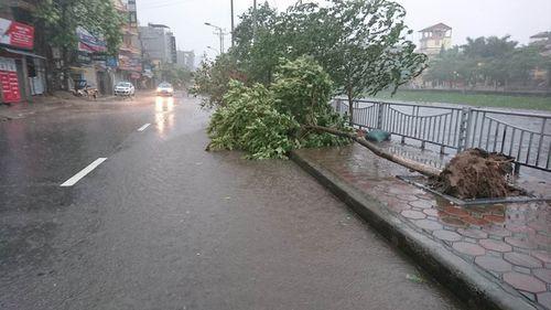 Mưa to, gió giật mạnh khiến cây đổ ngổn ngang tại Hà Nội - Ảnh 4