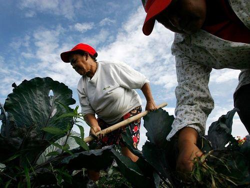 Lương thực cạn kiệt,  Venezuela huy động dân ra đồng làm việc - Ảnh 1