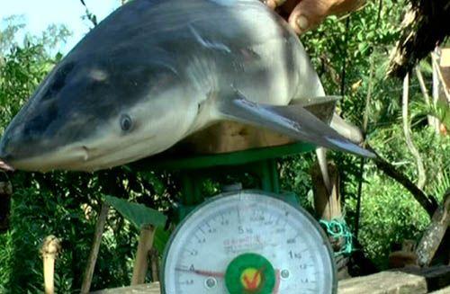 Ông lão 68 tuổi bất ngờ bắt được cá mập - Ảnh 1