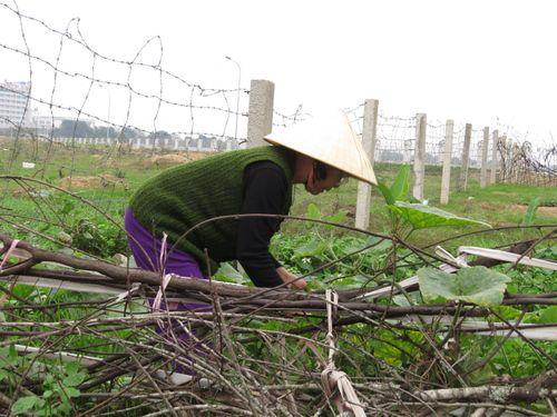 Thanh Hóa: Dự án Triển lãm dở dang, thành nơi... thả trâu bò - Ảnh 5