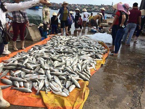 Thanh Hoá: Hàng chục tấn cá chết bất thường là do tảo nở hoa? - Ảnh 1