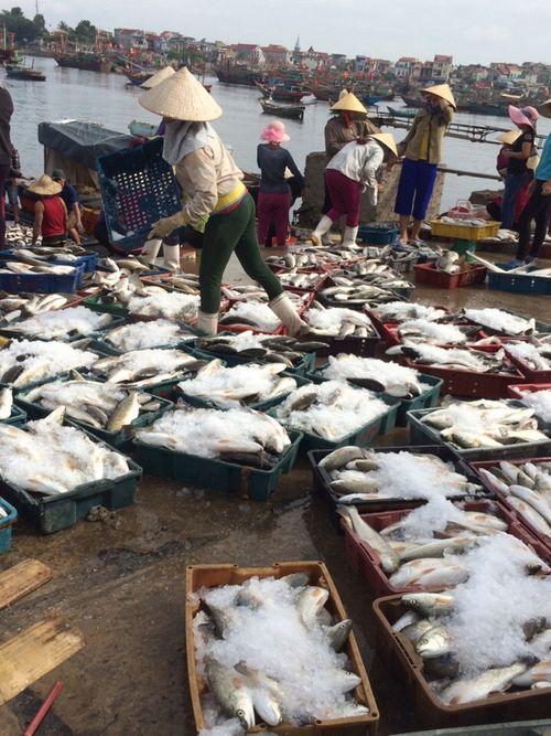 Lấy mẫu nước biển tìm nguyên nhân hàng chục tấn cá bị chết ở Thanh Hóa - Ảnh 2