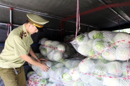Bắt giữ 2,5 tấn cải thảo, bắp cải Trung Quốc vận chuyển vào Nghệ An tiêu thụ  - Ảnh 1