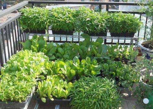 Tin tức ATTP ngày 15/7: Rau tự trồng vẫn có nguy cơ nhiễm kim loại nặng - Ảnh 1