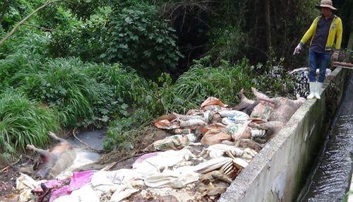 Tin tức ATTP ngày 19/7: Kinh hoàng xác lợn chết 'ngụp lặn' trên sông Sài Gòn - Ảnh 1