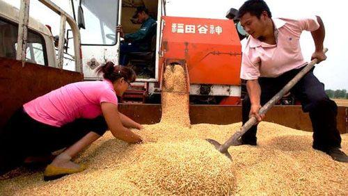 Mỹ kiện Trung Quốc trợ giá đối với nông sản vượt mức cam kết - Ảnh 1