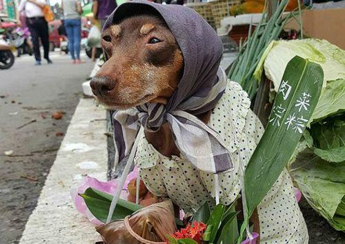 Hình ảnh lạ lẫm của chú chó bán trái cây khiến cư dân mạng thích thú - Ảnh 1