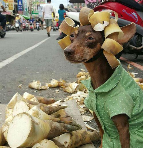 Hình ảnh lạ lẫm của chú chó bán trái cây khiến cư dân mạng thích thú - Ảnh 2