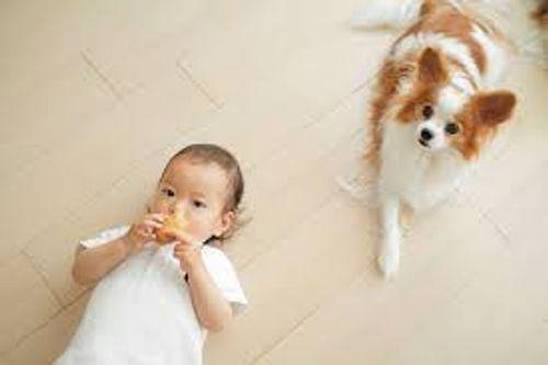 Cẩn thận với những bệnh con người dễ lây từ chó, mèo - Ảnh 1