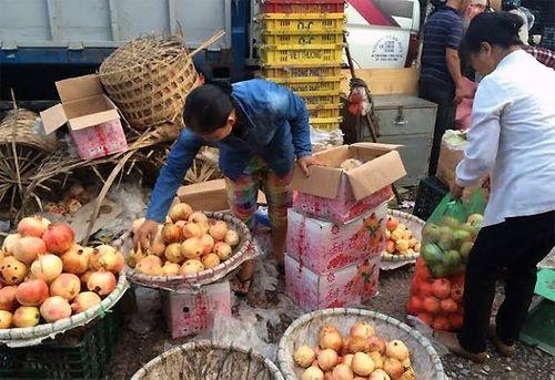 Tám loại hoa quả Trung Quốc nhập về Việt Nam nhiều nhất - Ảnh 1