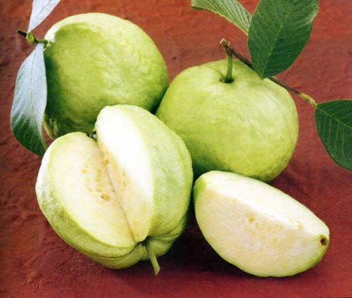 Những loại quả thuần Việt chính vụ vào mùa thu - Ảnh 3
